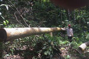 Tỉnh ủy Bình Phước chỉ đạo công an điều tra vụ phá rừng nghiêm trọng
