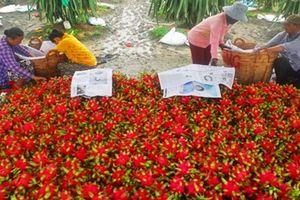 Thịt heo đắt đỏ, thanh long 'rẻ thối' và chuyện buồn dài tập của nông sản Việt