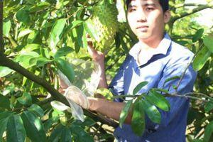 Chuyện 'lạ' ở An Giang: Mang túi bọc hết trái cây, sâu đành 'bó tay'
