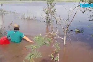 Theo chân thợ săn chuột đồng trên cây mùa nước nổi