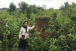 Quảng Ninh: Đất đang canh tác bỗng dưng giao cho người khác