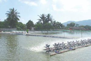 Quảng Nam: Khuyến cáo nuôi tôm vùng triều