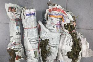 Quảng Nam: Bắt quả tang đối tượng vận chuyển cần sa khô