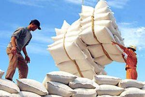 Cân đối nguồn vốn phục vụ kinh doanh xuất khẩu gạo