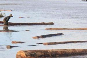 Khai thác cát, phát hiện hơn 50 khối gỗ sao đen