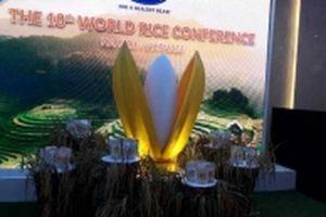 Xuất khẩu gạo Việt Nam: Tăng liên tục cả lượng và chất