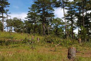 Bắt giam 5 nghi can tấn công trạm bảo vệ rừng, cướp tài sản