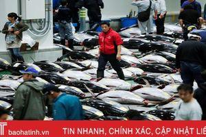 Chợ cá lớn nhất thế giới tổ chức phiên đấu giá đầu tiên tại địa điểm mới