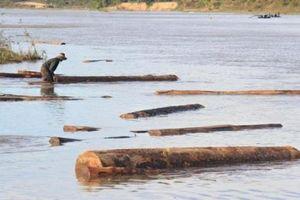 Khai thác cát, phát hiện lượng lớn gỗ sao đen
