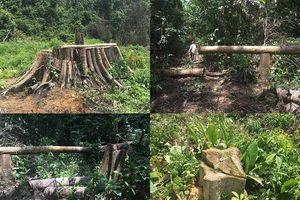 Tỉnh ủy Bình Phước yêu cầu điều tra vụ phá rừng nghiêm trọng