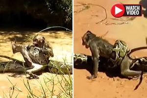 Hai cậu bé dũng cảm tay không gỡ trăn khổng lồ để cứu khỉ thoát chết