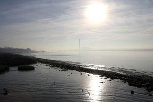 Hơn một phần tư cá ở sông Thames ăn phải nhựa