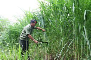 250 ha cây trồng huyện Cẩm Thủy được liên kết bao tiêu sản phẩm