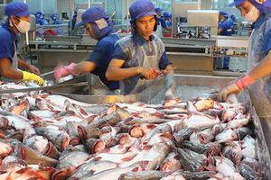 Nguồn lợi hải sản của Việt Nam đang suy giảm