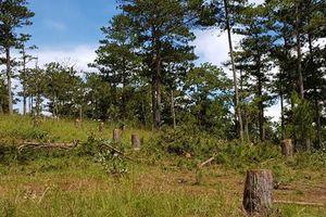 5 đối tượng tấn công chốt bảo vệ rừng, cướp tài sản sau chầu nhậu