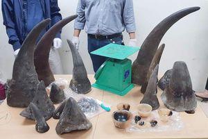 Phát hiện kiện hàng nghi chứa sừng tê giác gửi về từ Nam Phi