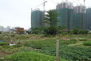 Thủ tướng yêu cầu nghiên cứu ý kiến của GS Đặng Hùng Võ về xử lý dự án 'treo'