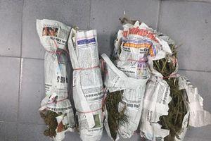 Bắt quả tang đối tượng tàng trữ số lượng lớn chất ma túy cần sa