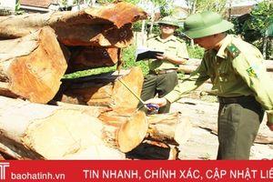 Hương Khê chặn 'chảy máu' rừng