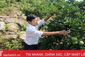 Sum suê vườn cam trên đồi đá của người cựu binh Hà Tĩnh