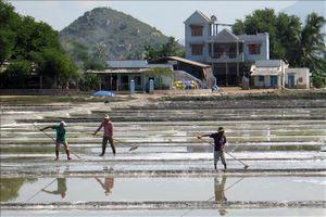 Nông dân Ninh Thuận dồn điền, đổi thửa làm giàu