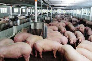Quảng Trị: Kỷ luật cán bộ khuyến nông, lấy tiền hỗ trợ trang trại của người dân