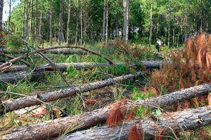 Lâm Đồng: Nhóm người mang hung khí tấn công chốt quản lý bảo vệ rừng