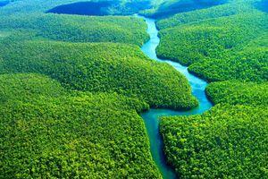 Khí hậu trên hành tinh gắn bó chặt chẽ với tương lai các khu rừng