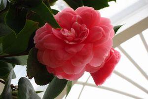 Top 10 loài hoa đẹp và hiếm nhất trên thế giới