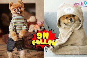 Chuyện khó tin: Chú chó sở hữu gần 9 triệu followers trên Instagram: Mức cát - xê vượt sao hạng A, quen mặt trên các trang bìa tạp chí