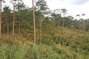 Phó chủ tịch xã để mất rừng bị đình chỉ công tác