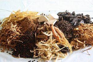 Kỳ 28: Nhờ thảo dược núi rừng ... 'thần y' chữa khỏi bệnh tiểu đường như thế nào ?