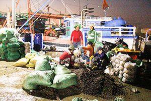 Đêm không ngủ ở cảng cá Đá Bạc