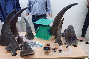 Phát hiện 13 sừng tê giác vận chuyển từ Nam Phi về Việt Nam