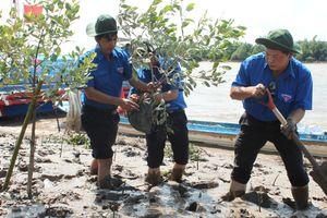 Trồng cây chống sạt lở cho kênh Quan Chánh Bố