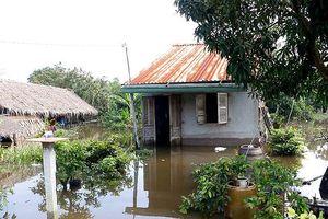 Triều cường gây thiệt hại nhiều tài sản cho người dân các tỉnh phía Nam