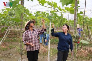 Nữ 'Giám đốc nông dân' giúp nông dân làm nông nghiệp sạch