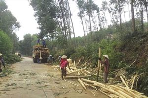 Sản phẩm gỗ Việt trước thách thức truy xuất nguồn gốc
