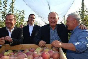 Ông Putin kỳ vọng nông nghiệp hóa giải đòn trừng phạt