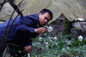 Chuyện ly kì về cuộc giải cứu 'quốc bảo' khỏi họa tuyệt chủng