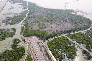 Kịch tính tại dự án cảng Cái Mép Hạ