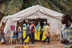 Congo xác nhận đợt dịch Ebola mới