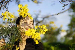 Đến Gia Lai ngất ngây trước rừng hoa muồng vàng rực