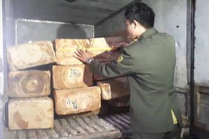 Mật phục bắt giữ xe tải vận chuyển gỗ lậu quý hiếm