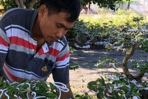 LẠ MÀ HAY: Cho dây nhôm 'bò' trên cây sanh, lãi trên 1 tỷ đồng/năm