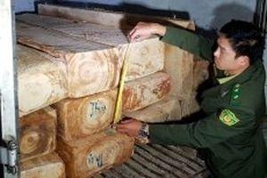 Mật phục bắt ô-tô vận chuyển gỗ pơ-mu trái phép trên QL27C