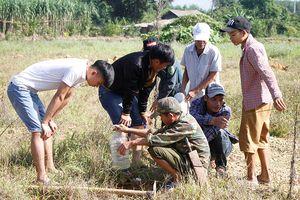 Độc đáo ngón nghề 'câu' dế cơm ở Hà Tĩnh