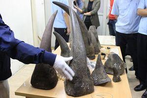 Hơn 95% sừng tê giác trôi nổi trên thị trường Việt Nam là hàng giả?