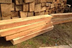 Khen thưởng tập thể, cá nhân bắt giữ vụ vận chuyển trái phép gỗ pơ mu tại Lâm Đồng