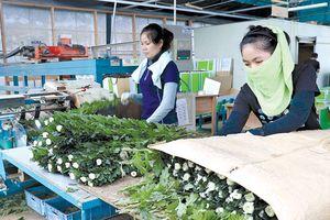 Nhật Bản mở cửa cho lao động nghèo nước ngoài